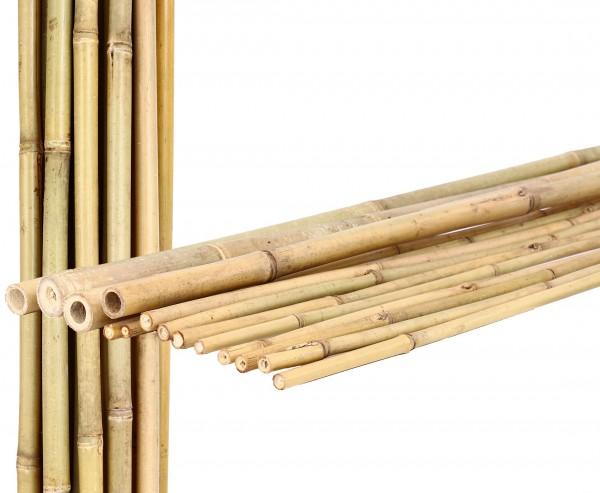 Bambusrohr Tonkin 200cm natur Durch. 2,2 bis 2,4cm