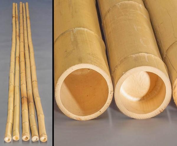 Bambusrohr gelb, Moso Bambus, gebleicht, Durch. 10- 12cm, Länge 600cm