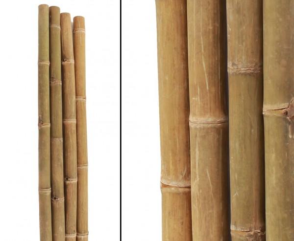"""Bambusrohr """"Petung"""", gelb braun, Durch. 11- 14cm, Länge 580cm"""