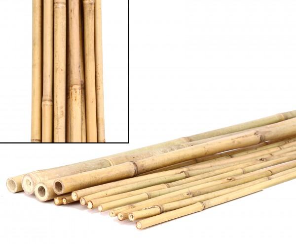 Bambusrohre Tonkin, naturbelassen,  Durch. 1,6- 1,8cm, Länge 240cm