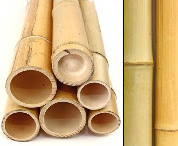 Bambusstange Moso 100cm gelb Durch. 6,8 bis 8cm, gebleicht