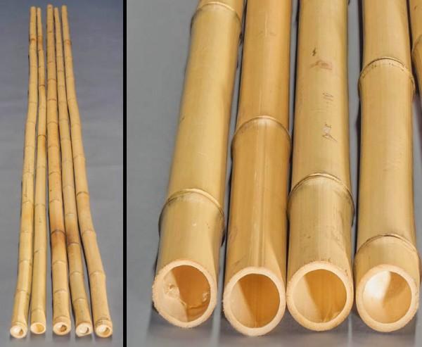 Bambusrohr gelb, Moso Bambus, gebleicht, Durch. 6- 8cm, Länge 600cm