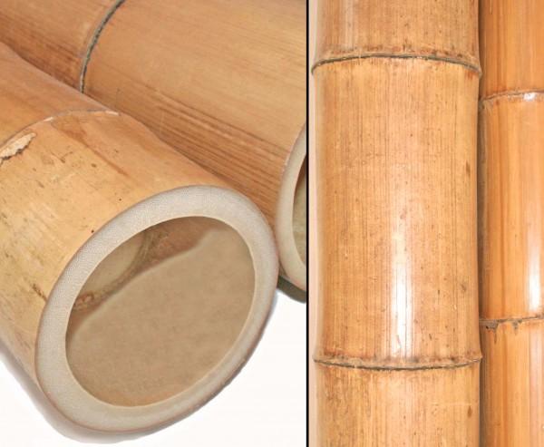 Bambusrohr Moso 200cm Durch. 12 bis 14cm, gelbbraun hitzebehandelt