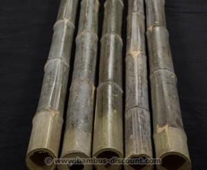 Bambusrohr_naturgruen