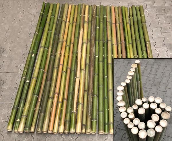 "Grüner naturbelassener Bambuszaun gerollt ""Big Green"" 150x200cm mit 4 bis 6cm B-Ware"