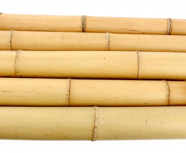 Moso Bambusrohr gelb gebleicht 200cm mit 10 bis 12cm Durchmesser