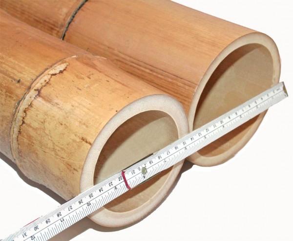 Bambusrohr 300cm gelbbraun Durch. 14 bis 16cm, Moso Natur hitzebehandelt
