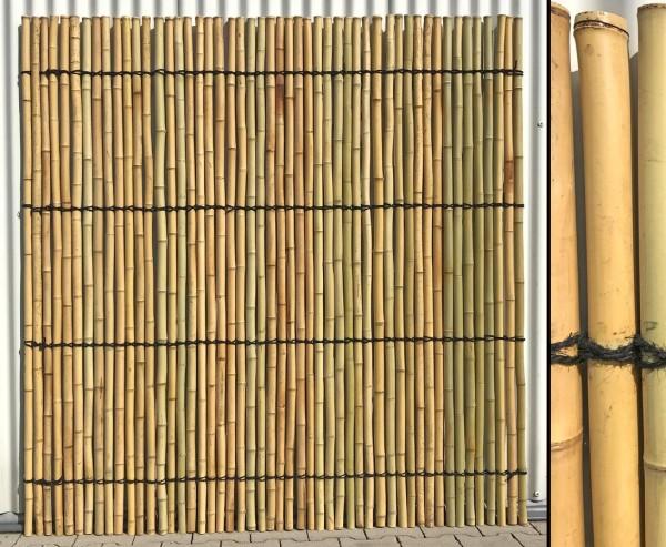 Bambus Rollzaun, Moso gelblich, verschnürt, gebleicht, 180 x 180cm, Durch. Bambusrohre 3- 3,4cm