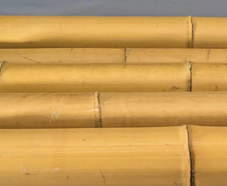 12 bis 15cm bambus-discount.com Bambusrohr Moso mit 100cm gelblich Durch Gebleicht Bambusrohre Rohre aus Bambus