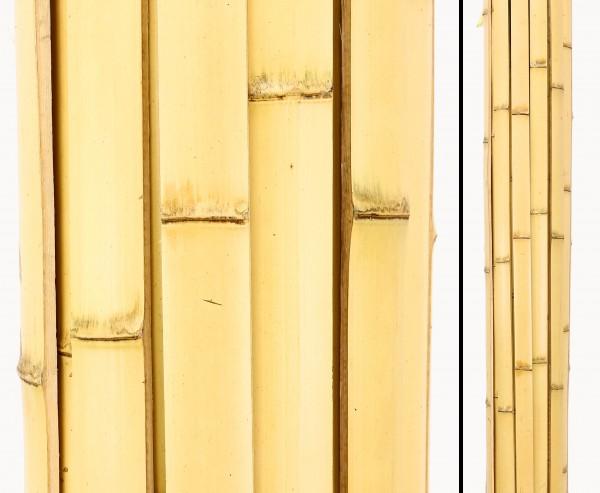 Bambusrohr Latten 200cm, Moso gelb gebleicht, Breite 4 bis 4,5cm