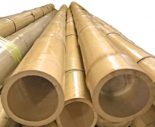 """Bambusrohr """"Tokio"""" lackiert mit 6 bis 8cm, Länge 200cm"""