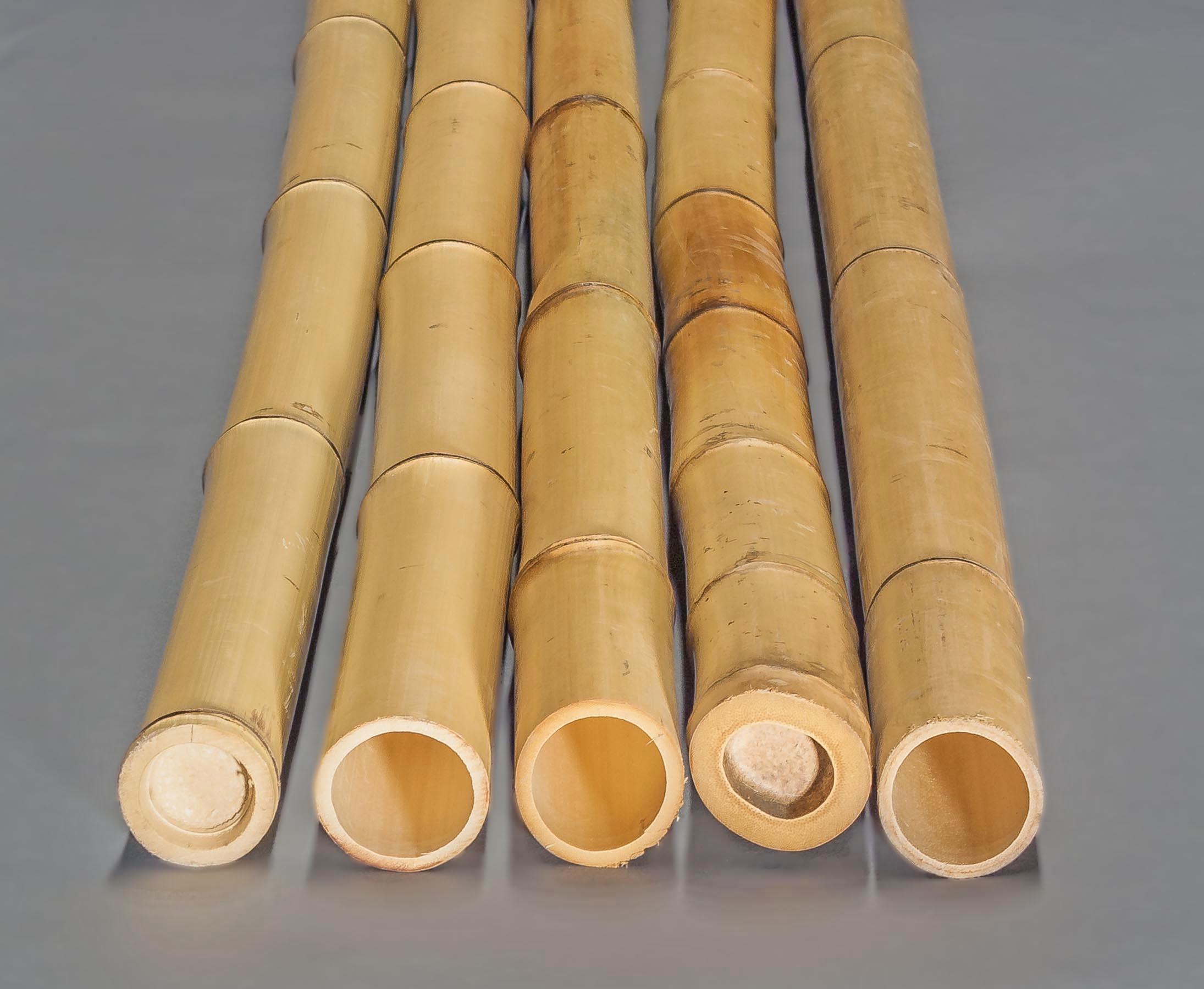 5 bis 6cm 180cm 1x Bambusrohr Moso naturgr/ün mit einem Durch von ca L/änge ca