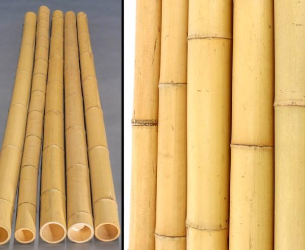 Bambusrohr gelb, Moso Bambus, gebleicht, Durch. 10- 12cm, Länge 300cm