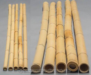 Gelbes Bambusrohr für Ihren Garten!