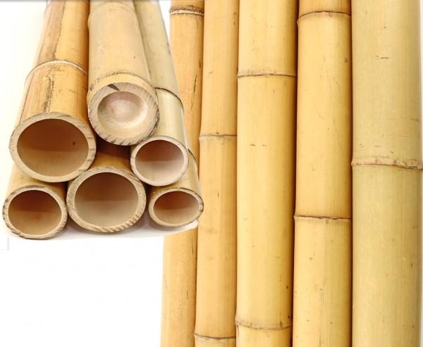Bambusrohr gelb, Moso Bambus, gebleicht, Durch. 6- 7cm, Länge 300cm