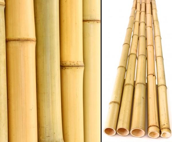 Bambusrohr gelb, Moso Bambus, gebleicht, Durch. 4,8- 6cm, Länge 240cm