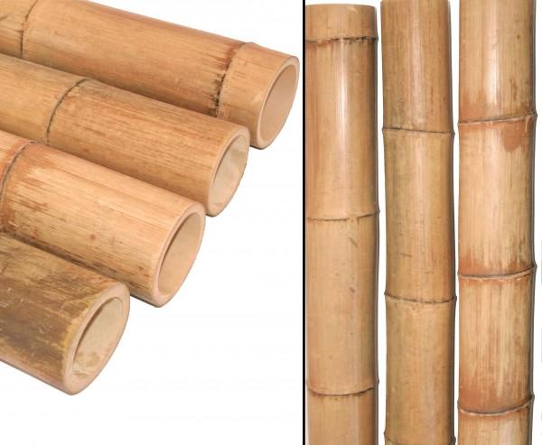 Bambus natur gelbbraun 150cm Durch. 10 bis 12cm, Moso unbehandelt getrocknet und hitzebehandelt