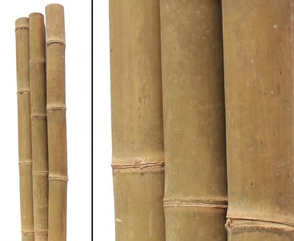 Riesenbambus, gelb braun, behandelt mit Borsalz, Durch. 14- 17cm, Länge 580cm