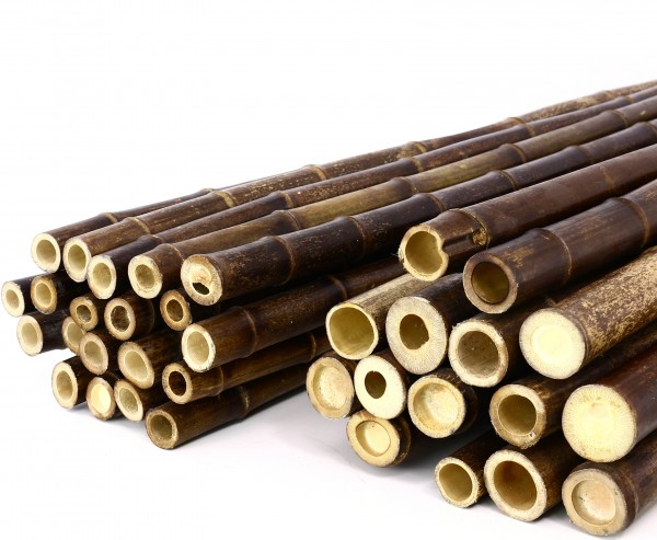 Bambusrohr schwarz-braun 200cm mit 5 bis 5,5cm, naturbelassen