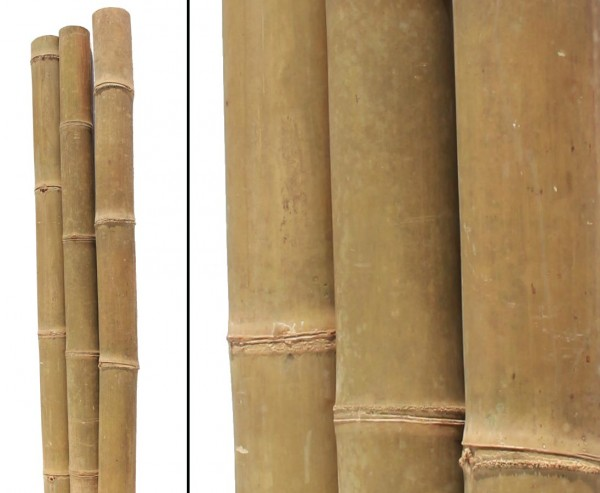 Bambusstange Petung 300cm gelb braun mit Riesen Durch. 13 bis 16cm, behandelt mit Borsalz