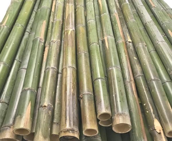 Bambusrohr grün naturfarben 180cm mit Durch. 4 bis 5cm, Moso unbehandelt