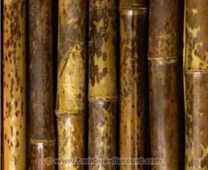 Bambus in der Vase