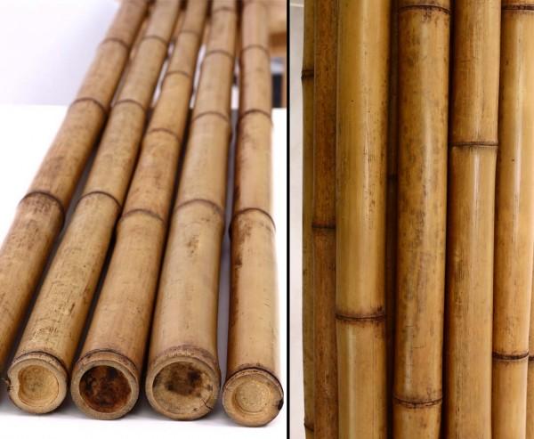 Bambus karamellfarben 200cm mit Durch. 5-6cm, Hitze Behandlung im Karbid Ofen
