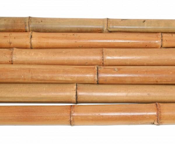 Bambusrohr 300cm gelbbraun Durch. 6 bis 7cm, Moso Natur hitzebehandelt
