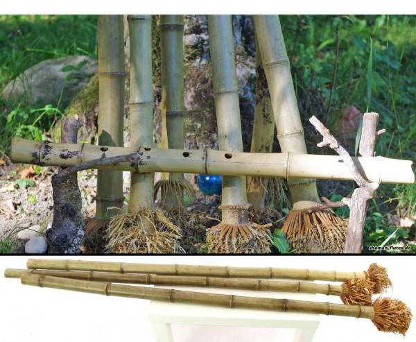 Bambus mit Wurzel als Ansatz 100cm 4 bis 5cm, Madake hitzebehandelt für Shakuhachi