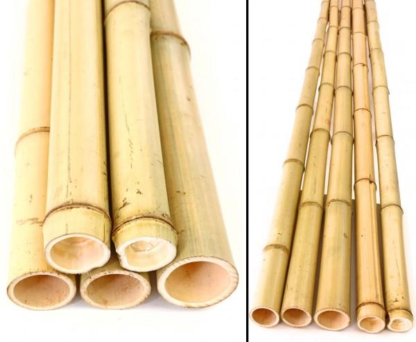 Bambusrohr Moso 100cm gelb Durch. 4,8 bis 6cm, gebleicht
