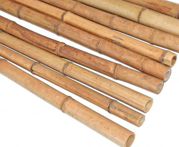 Bambus 300cm gelbbraun Durch. 3 bis 4cm, Moso Natur hitzebehandelt