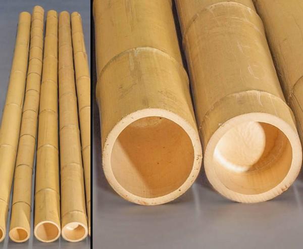 Bambusrohr gelb, Moso Bambus, gebleicht, Durch. 15- 18cm, Länge 300cm