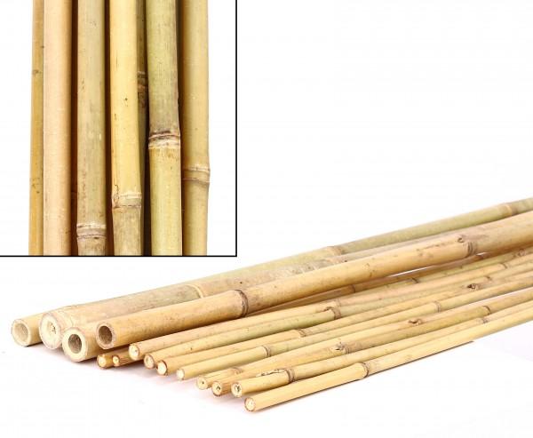 Bambusrohre Tonkin, gelblich, naturbelassen, Länge 300cm