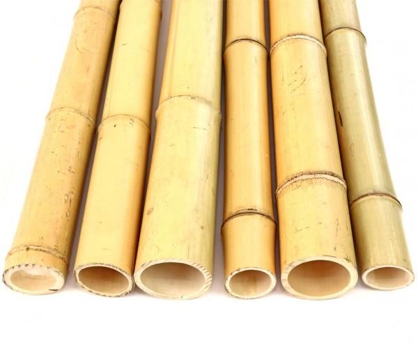 """Bambusstange """"Moso"""" gebleicht, Durch. 6- 7cm, Länge 200cm"""