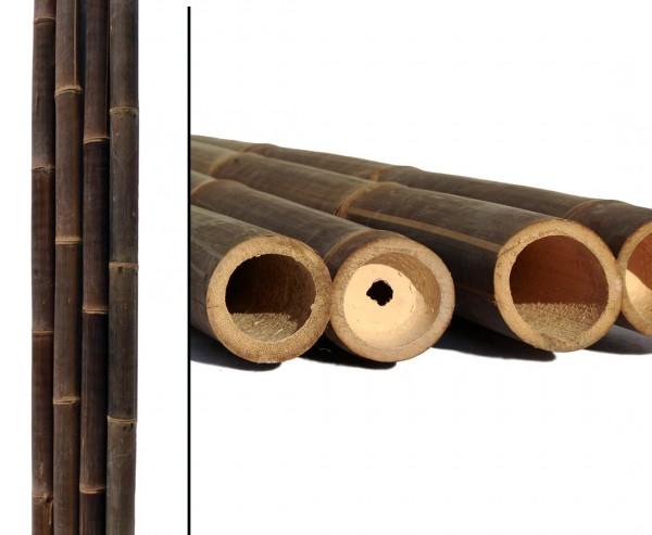 Bambusrohr Wulung 580cm in schwarz braun mit Durch. 6-8cm, mit Borsalz behnadelt