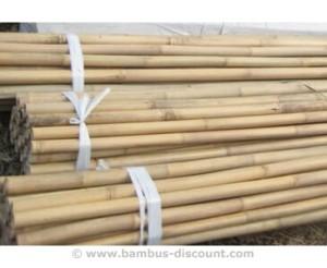 Bambusrohre Tonkin von bambus-discount.com