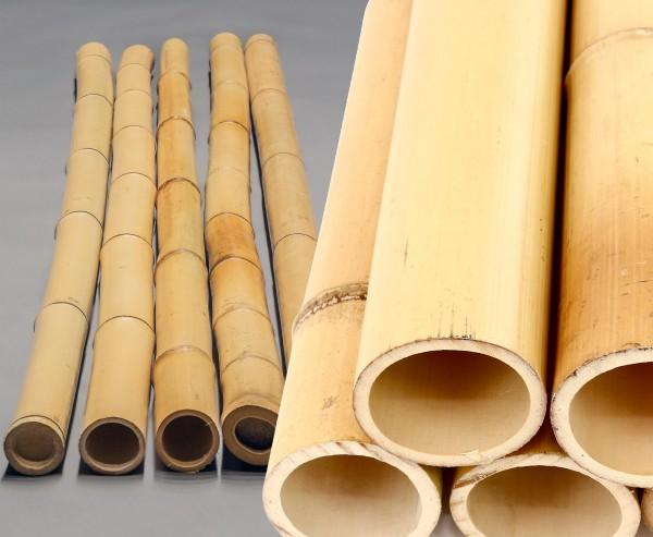 Moso Bambusrohr gelb gebleicht 200cm mit 12 bis 16cm Durchmesser