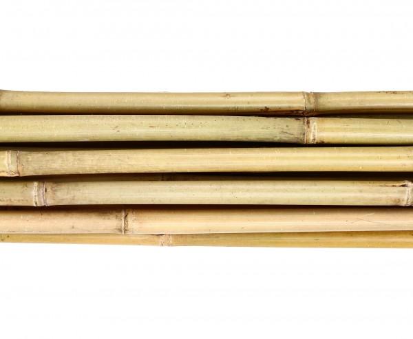 Tonkin Bambusrohr 200cm mit 2,4 bis 2,8cm gelblich und naturbelassen