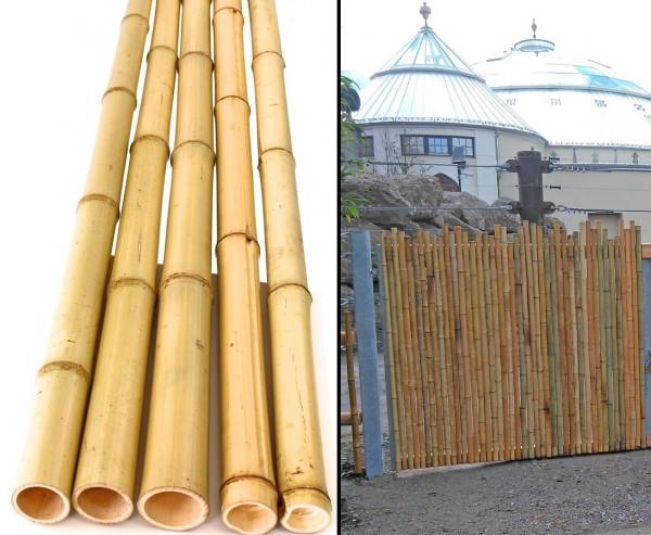 Bambusrohr gelb, Moso Bambus, gebleicht, Durch. 4,8- 6cm, Länge 180cm