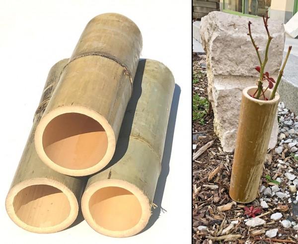 Bambus als Pflanzen- und Setzlingen Schutz mit 25cm und einem Durch. von 6-7,5cm