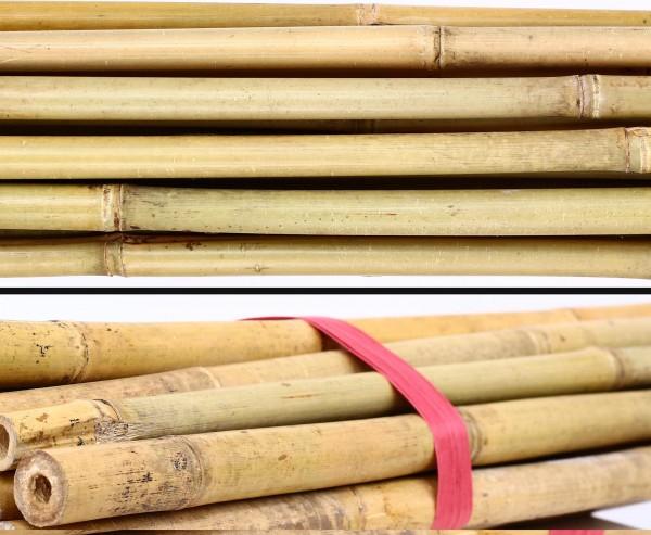 Bambusstab Tonkin 200cm natur Durch. 2,0 bis 2,2cm