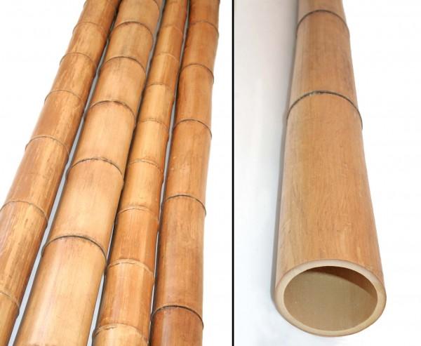 Bambusrohr 300cm gelbbraun Durch. 8 bis 10cm, Moso Natur hitzebehandelt