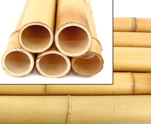 Bambusrohr Moso gelb gebleicht 100cm mit 12 -15cm Durch.
