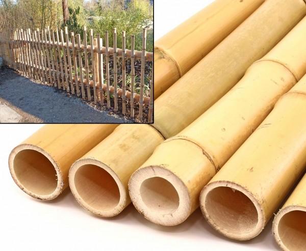 Bambushalm Moso 100cm gelb Durch. 2,8 bis 4cm, gebleicht