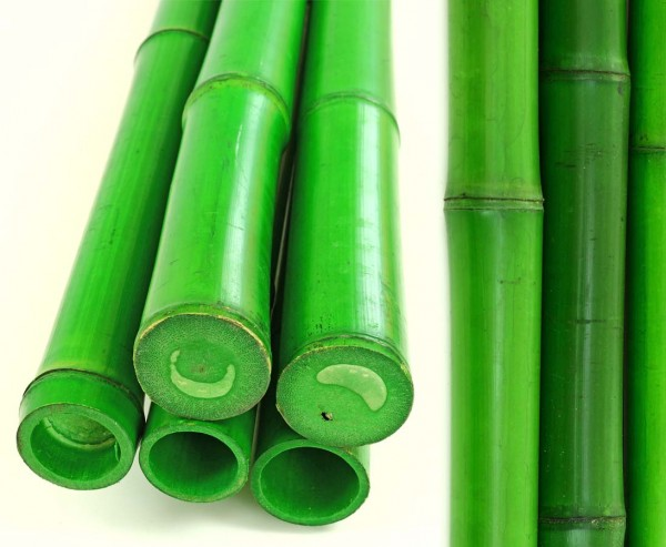 Bambusrohr grün gefärbt Durch. 5- 6,5cm, Länge 300cm