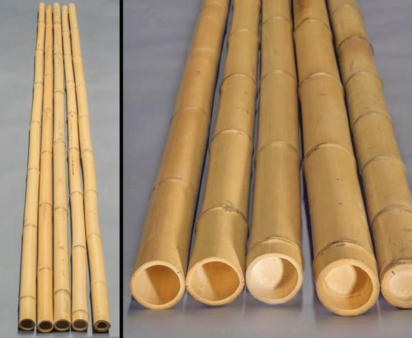 Bambusrohr gelb, Moso Bambus, gebleicht, Durch. 7- 8cm, Länge 300cm