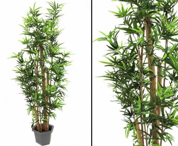 Bambus, dicke Naturstämme, 150cm