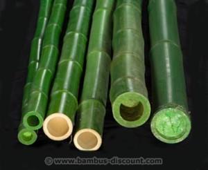 Grünes Bambusrohr jetzt bei bambus-discount.com