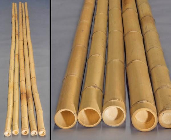 Bambusrohr gelb, Moso Bambus, gebleicht, Durch. 8- 10cm, Länge 600cm