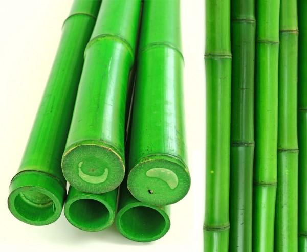 Moso Bambusrohr 200cm grün gefärbt mit 200cm Durch. 6,5 bis 8cm